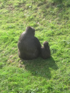 Chris and Freddy bonding....umm I mean, two gorillas..